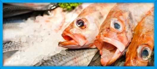 sffd-fish-slide2